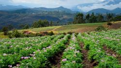 Protec de la mano con los agricultores