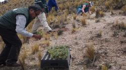Proyectan instalar 1.6 millones de plantones forestales en 16 regiones