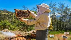 Proyecto Sierra y Selva Alta duplicó ingresos de familias agricultoras en cuatro regiones del país