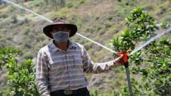PSI capacitará en sistemas de riego a 952 agricultores de Cajamarca y Ayacucho
