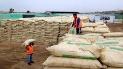 Puno: agricultores de Sandia reciben más de 2.300 sacos de guano de isla
