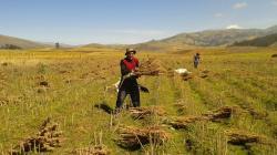 Quinua, kiwicha y chía orgánica de Apurímac conquistan el mercado francés