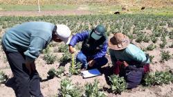 Recomendaciones para prevenir daños en cultivos por lluvias intensas