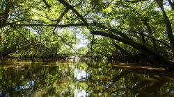 Regiones amazónicas aplicarán tecnología avanzada para elborar mapa de humedales