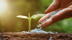 Reglamento de fertilizantes ayudará a formalizar el sector