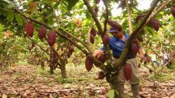 San Martín es la segunda región con mayor crecimiento del PBI agrícola en el primer semestre de 2020