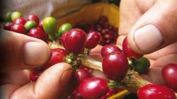 San Martín: Escuelas de Campo capacitarán a cientos de agricultores para producir alimentos inocuos