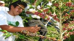 San Martín: instalan planta procesadora y laboratorio de café en Rioja