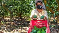 Se dio el primer paso para determinar los actores que van a conformar la nueva oferta agrícola
