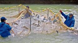 Se necesita una nueva ley para que la acuicultura peruana sea potencia mundial