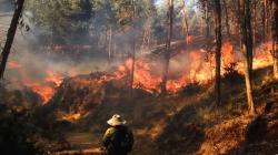 Se pondrá en marcha plan de recuperación de zonas afectadas por incendio forestal en Cusco