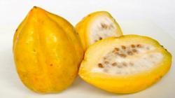 Se realizará curso del agronegocio de la Papaya Andina y Precoz
