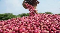 Sector agropecuario crece 1.4% en los primeros siete meses del 2021