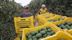 Sector agropecuario nacional crece 6% en agosto