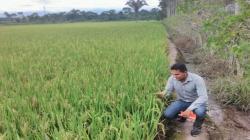 Sector agroquímico en Perú facturará US$ 208 millones, creciendo más de 5% este año