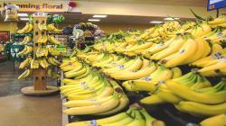 Sector bananero de América Latina insta a la responsabilidad compartida entre todos los agentes de la cadena de suministro
