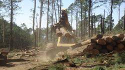 Sector forestal atrae interés de inversionistas de largo plazo