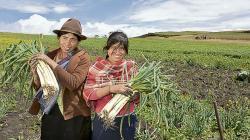Segunda reforma agraria no contempla expropiaciones