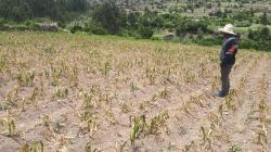 Seguro Agrícola Catastrófico cubrirá las 24 regiones del país