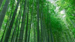 Semana del Bambú Lima 2021 se realizará del 27 al 29 de octubre