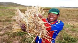 Sembrarán más de 2 mil hectáreas de granos andinos en Puno en la campaña 2020/2021