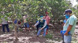 Senasa activó 10 escuelas de campo para empoderar a pequeños productores de naranjo