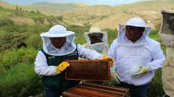 Senasa ampliará cobertura para control y tratamiento de enfermedades en abejas