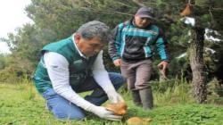 Senasa autorizó funcionamiento de dos plantas procesadoras de hongos comestibles