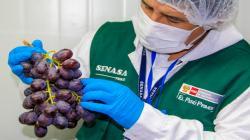 Senasa autorizó más de 1.500 establecimientos de procesamiento primarios desde el 2012 a la fecha