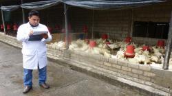 Senasa autorizó nuevo centro de faenado avícola en Cusco