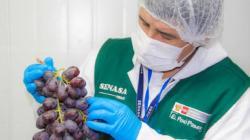 Senasa: Crean Unidad de Evaluación de Riesgos de Alimentos Agropecuarios Primarios y Piensos