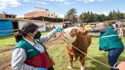 Senasa garantizó la sanidad del ganado en exhibición de Fongal 2021