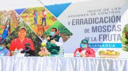 Senasa inicia la supresión de las moscas de la fruta en Cajamarca