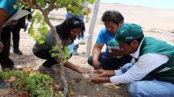 Senasa inspecciona campos de cultivos por alerta de presencia de moscas domésticas en Tacna