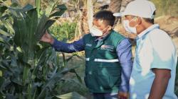Senasa instalará 70 Escuelas de Campo de Agricultores en Lambayeque este año