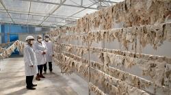Senasa otorgó autorización sanitaria a primera planta procesadora de charqui en Ayacucho