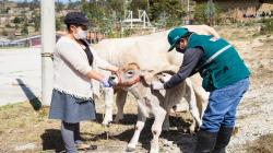 Senasa vacunó contra la rabia de los herbívoros a 290.000 animales anualmente desde 2017 hasta agosto de 2020