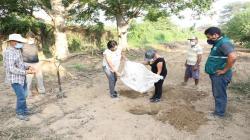 Senasa y productores de Motupe unen esfuerzos para la supresión de la plaga mosca de la fruta