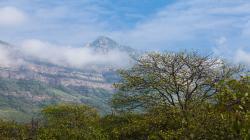 Serfor destaca experiencias exitosas en la gestión de bosques