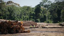 Serfor publica documento que establece mecanismo de trazabilidad de la madera