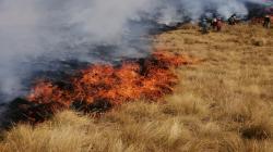 Serfor y cooperación japonesa se unen en proyecto para prevenir incendios forestales en cinco regiones