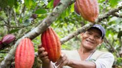 Sernanp expone experiencias exitosas de cacao producido en áreas libres de deforestación