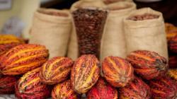 Siguiendo a África, productores de cacao en Latinoamérica evalúan precio mínimo