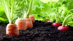 Sin suelos sanos peligra la seguridad alimentaria