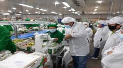 Sunafil: empresa Los Olivos de Villacuri levanta observaciones realizadas por inspectores de trabajo