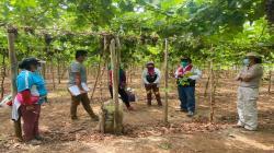 Sunafil recibió 33 denuncias de trabajadores de empresa agraria en Ica