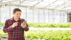 Tecnología blockchain: una oportunidad para aumentar el comercio agroalimentario de Perú