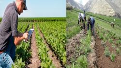 Tecnologías Digitales y Agricultura Familiar