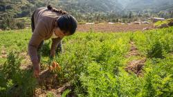 Tendencias de mercado para la agricultura familiar