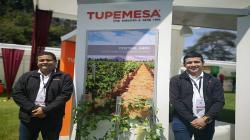 Tupemesa: La innovación tecnológica permite hasta un ahorro de 25% en producción de uva de mesa
